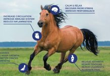 RedHealth Wearable Equine PEMF Devices – PEMF Therapy For Horses