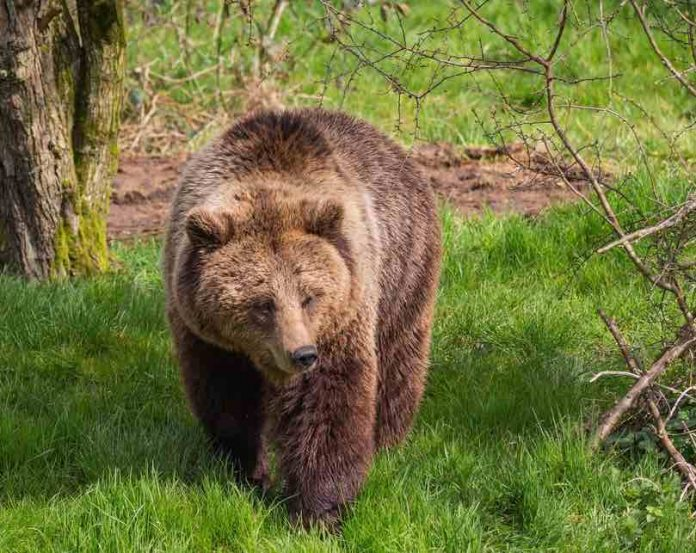 Brown bears euthanised after escaping from Whipsnade Zoo