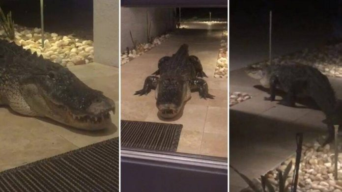 Terrified couple have a late night visitor (Video)