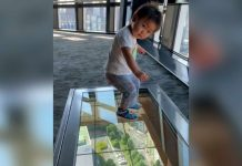 Toddler has hilarious reaction to glass floor viewing deck (Video)